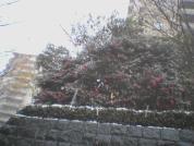 snow-2002-12-9-3.jpg